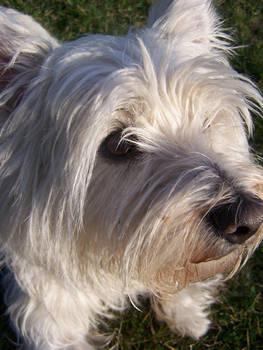 Dog 003 by Kaichen-Stock