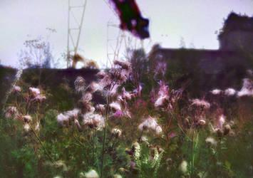 foggy dream by Alexanika