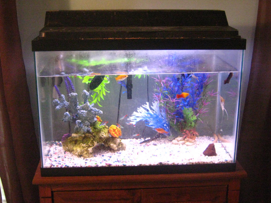 20 gallon aquarium tank only innovative marine 20