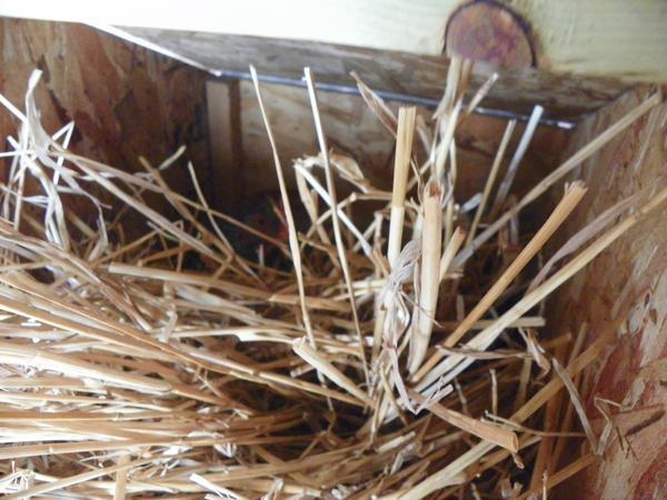 Nest making by NZealo