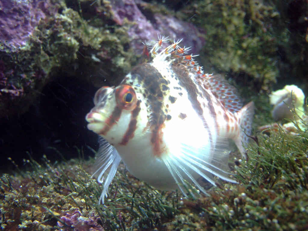 What kind of fish is this by sdrseries on deviantart for What kind of fish is this