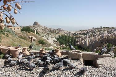 Turkish Pigeons by MaeraFey