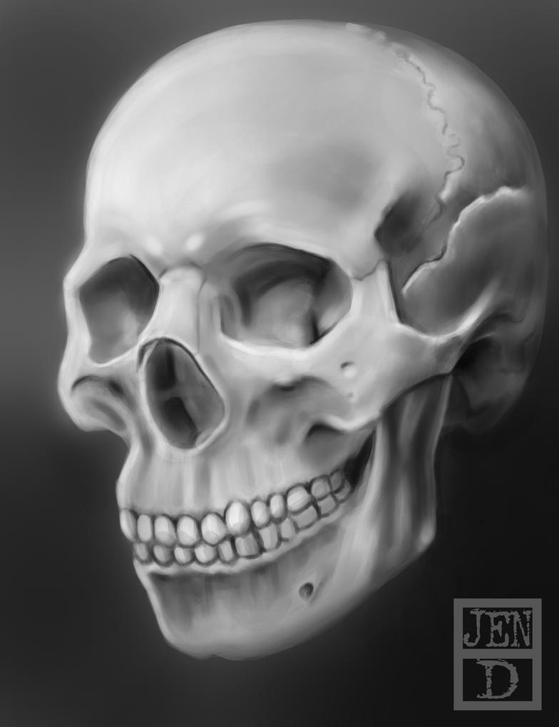 Skull Study by jendy-4