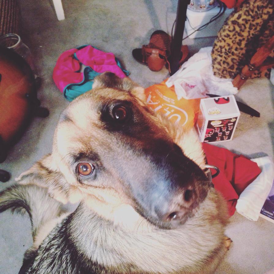 Meet my dog.  by smoljae