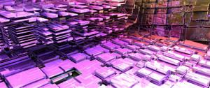 Pink Lumber