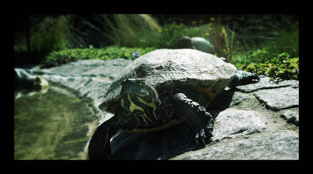 My Turtle by robanat