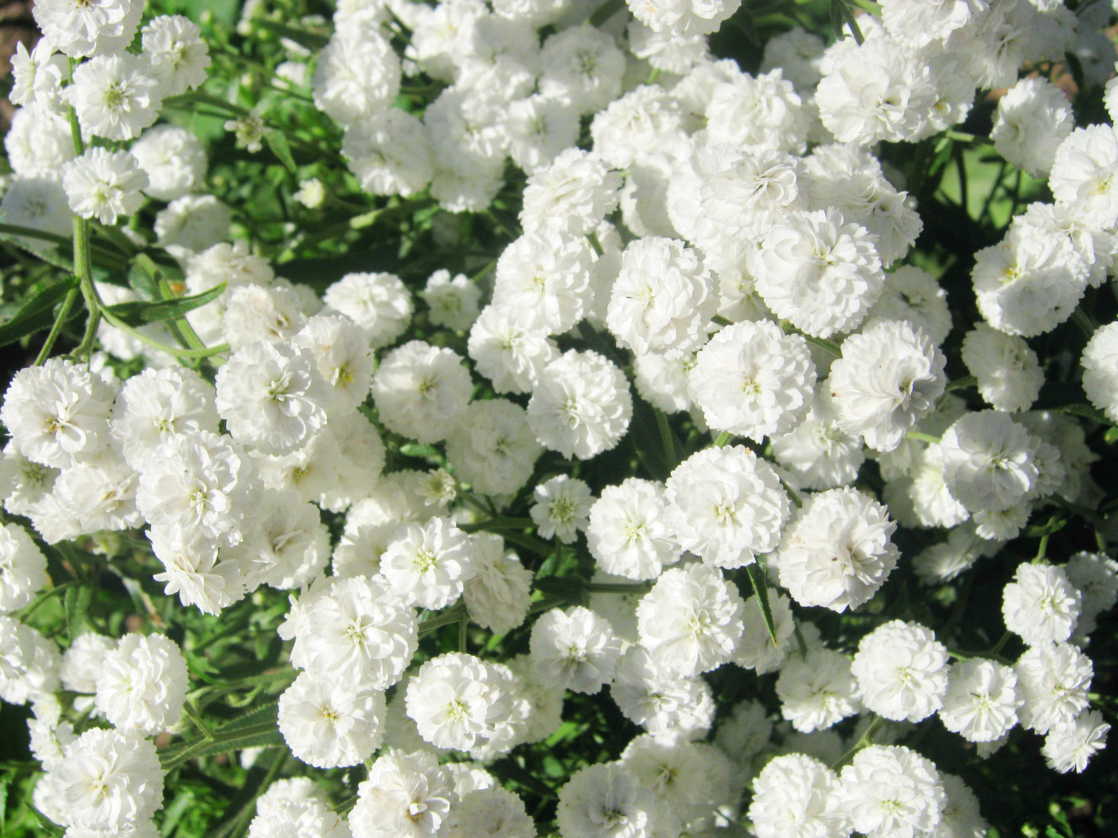 White Flowers Tumblr Dress Images