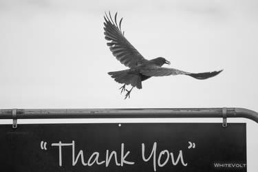 Thankful Crow by WhiteVolt