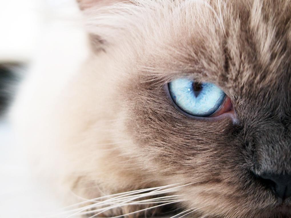 one eye blue flame by Jesuke
