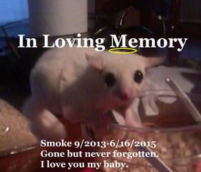 Memorial for Smoke by KrisNZoe