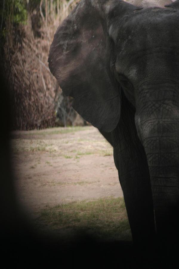 Elephant by Zenith-AzuraTiger
