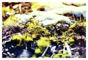 Mossy Snow