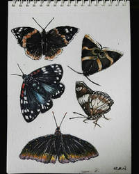 bugs by Aldonika