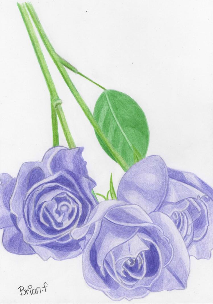 Purple roses by ArtfullyArty