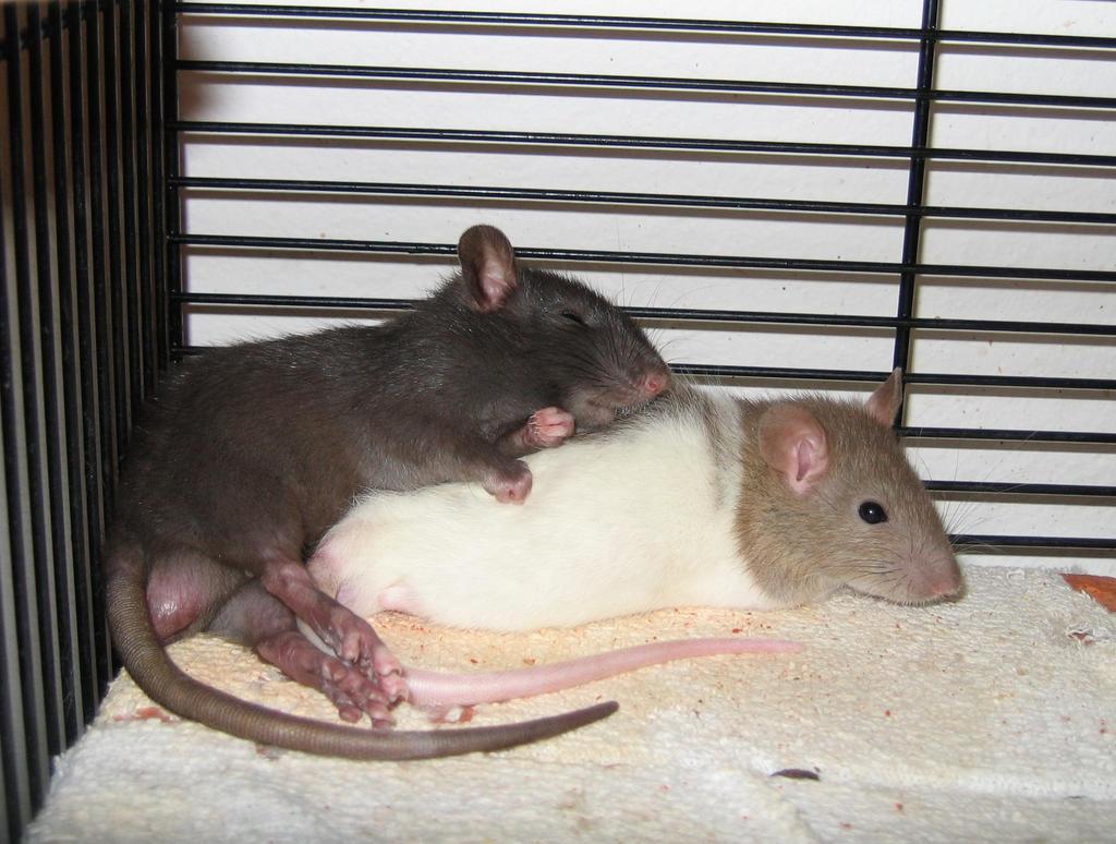 Lenny and Gambit by marousha