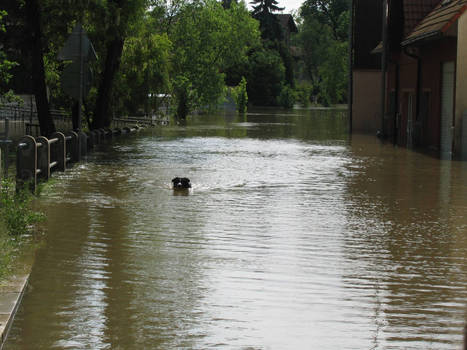 Prague flood 2013(2)