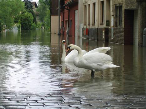 Prague flood 2013(3)