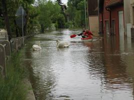 Prague flood 2013(4)