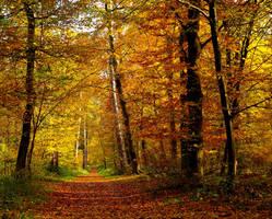 long forgotten autumn