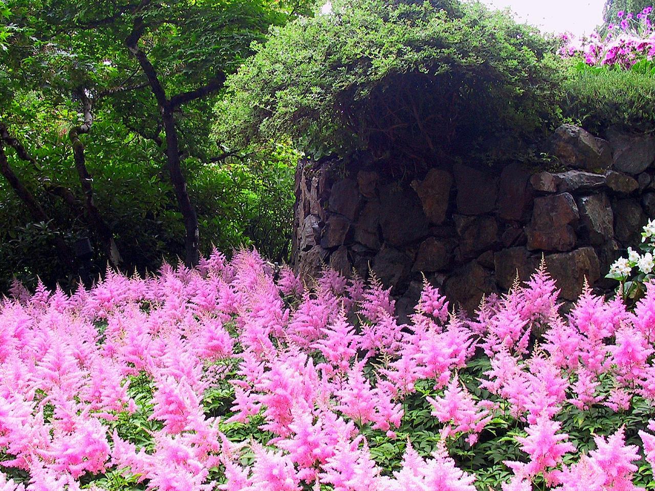 Amazingly Pink Garden by misterkyle