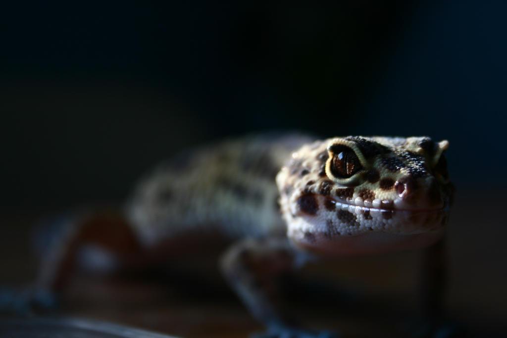 Lizard by ermbmx2