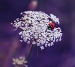 Ladybug by DevchonkaLucky