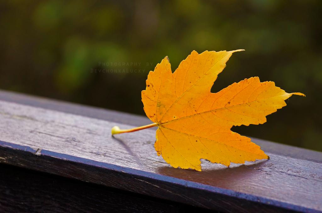 Golden Autumn by DevchonkaLucky