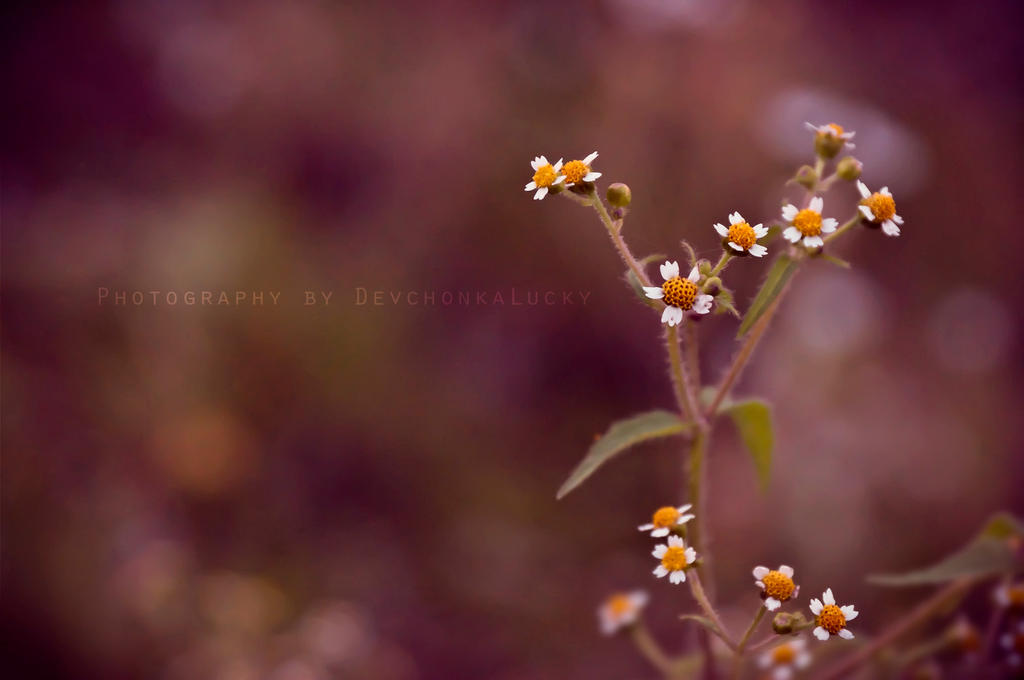 Small Flowers by DevchonkaLucky