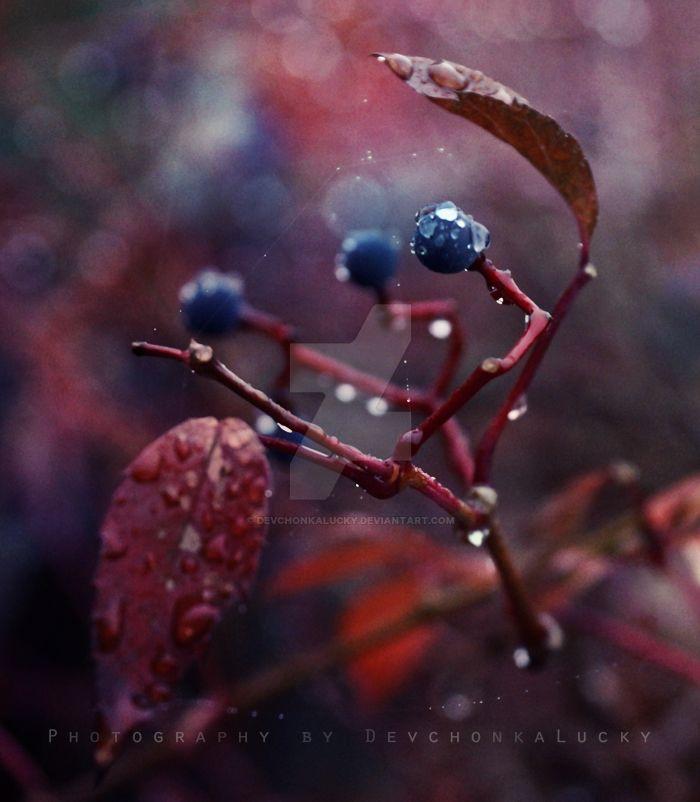 Autumn Rain by DevchonkaLucky