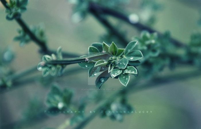 Green Drops by DevchonkaLucky