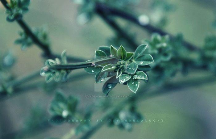 Green Drops by DevchonkaLucky