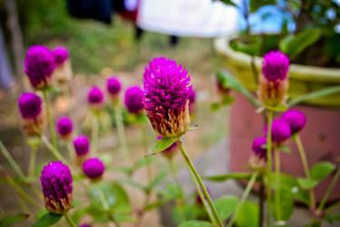 It blooms again by OhBetterOnes