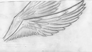 Wings by kasqlaa