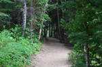 wooded path2