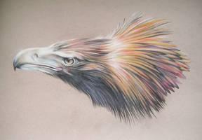 Wedge Tailed Eagle Pastels by LyrebirdJacki