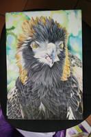 Black Breasted Buzzard Part 1 by LyrebirdJacki