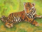 Tiger Os
