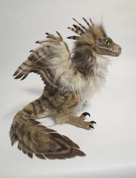 feather raptor chick