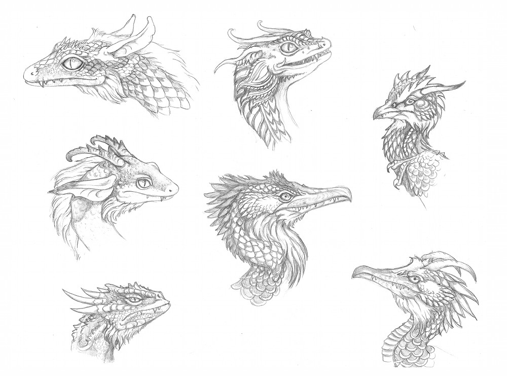 Dragon head sketches by kimrhodes