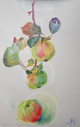 Apple Tree Branch (2013) by stefonthesea