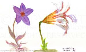Fleur en etoile Lis (2011)