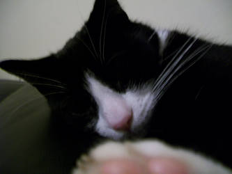 Barney sleeping by saiyan-chan