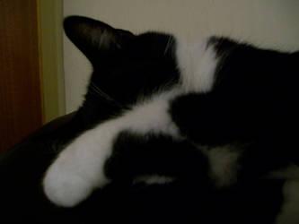 Butch sleeping by saiyan-chan