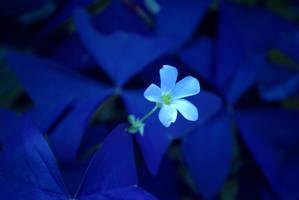 midnight flower by slitToMyguts