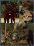 twilight - wolf pack