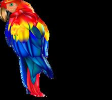 Papousek Vojta