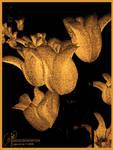 Golden sprinkle by petrova