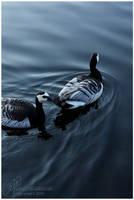 Pond Life II by petrova