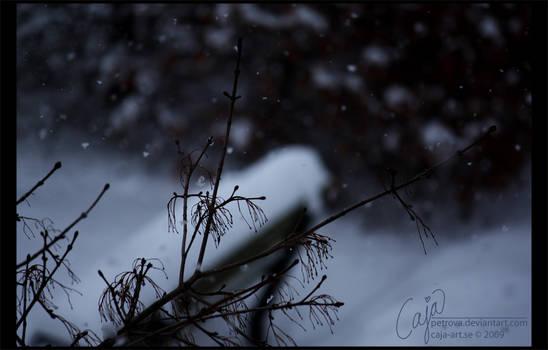 Season view - winter