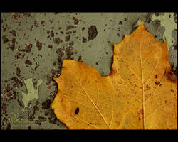 Fall on earth by petrova